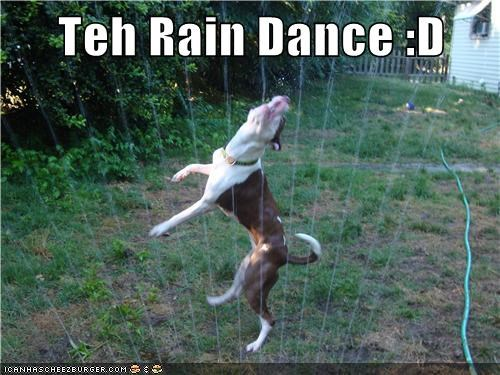dogs lawn Rain Dance sprinkler what breed