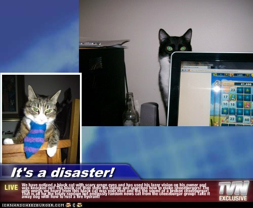 It's a disaster! - We have noticed a black cat with scary green eyes and has used his lazer vision on his owner and was knocked out! The black cat then stole the laptop and searched how to make cheezburgers! The only words we heard from this black cat was your next and the the sound of a broken cheezburgar! That is all for the totaly random but endlessly random news cat from the cheezburgar group! Take it away dog with how to rust a fire hydrant!