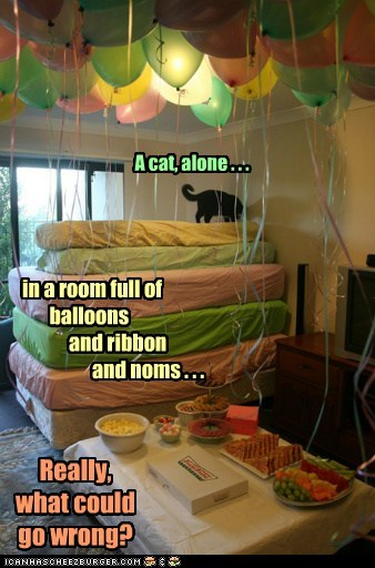 Balloons,captions,Cats,disaster,noms,Party,ribbon