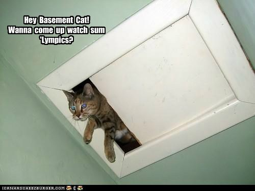 Catolympic trush Hey Basement Cat! Wanna come up watch sum 'Lympics?