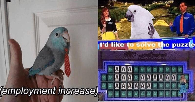 Funny bird memes, birb memes, birds.