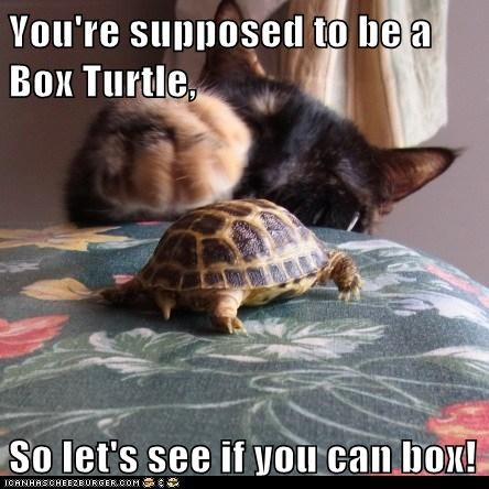 You're supposed to be a Box Turtle,  So let's see if you can box!