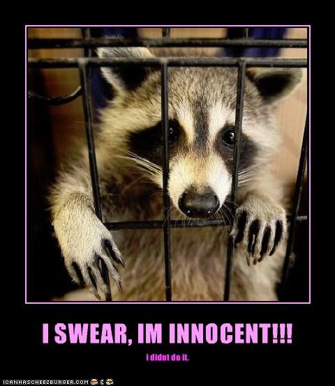 I SWEAR, IM INNOCENT!!! i didnt do it.