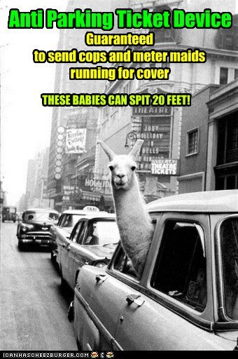 car llama parking street - 6504934400