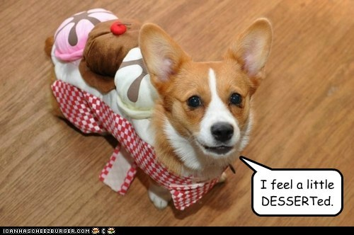 corgi,costume,dessert,dogs,ice cream,pun,sundae