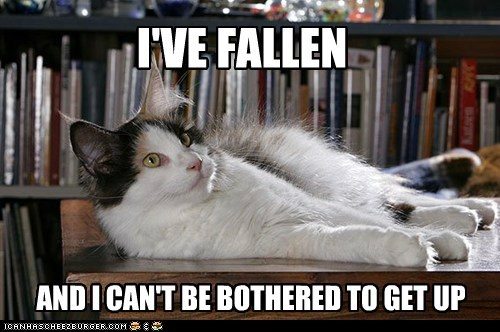 apathy,captions,Cats,fall,i've fallen and I can't g,ive-fallen-and-i-cant-get-up,lazy