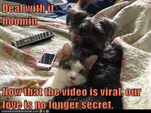 captions Cats love romance secret Video - 6505975808