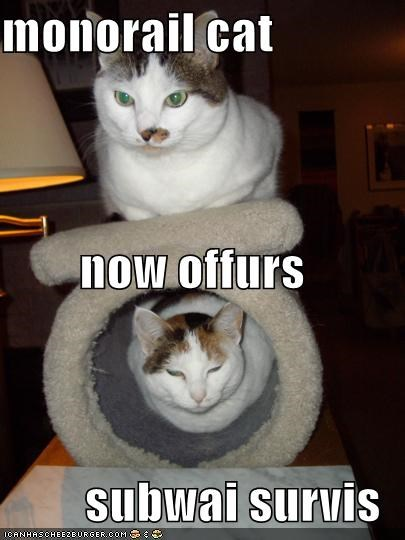 lolcats,monorail cat,subway cat