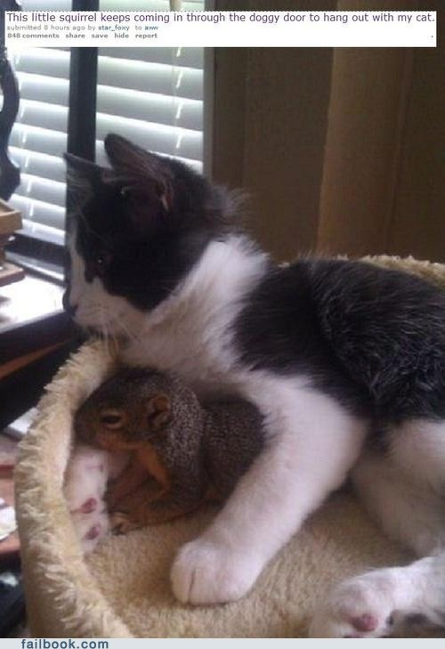 animals cat failbook g rated Reddit squirrel