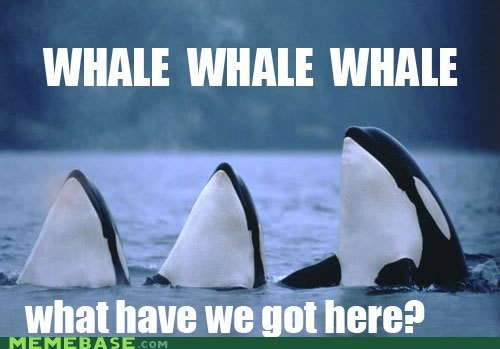 puns well whale - 6506595584