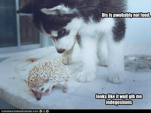 dogs,hedgehog,indigestion,not food,prickly,puppy