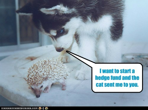 advice,cat,dogs,financial advice,hedge fund,hedgehog,insecurity