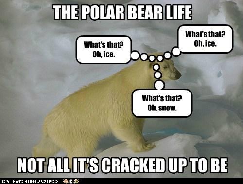 boring glamorous ice life polar bear same snow white - 6506899968