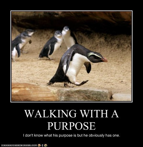 angry,hunched,penguin,purpose,walking