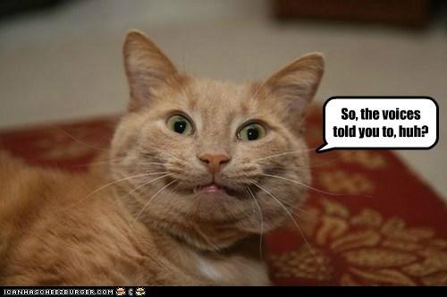 captions Cats crazy insane listen nuts schizophrenia voices - 6507344384