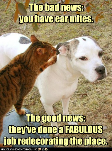 bad news,captions,Cats,dogs,ear,good news,mites,redecorate