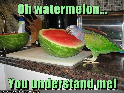 captions,friends,hug,parrot,watermelon,you understand me