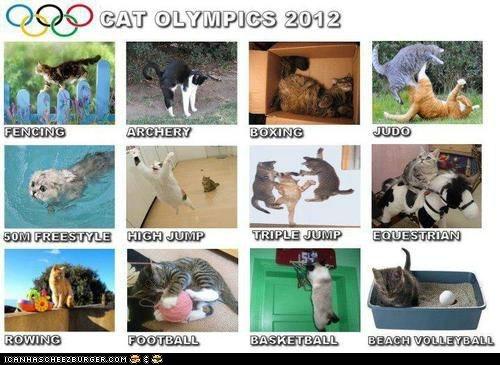 2012 Cats olympics sports - 6507920128