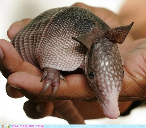 armadillo armor baby leather squee squee spree