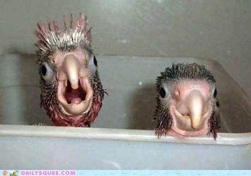 bath time beak bird creepicute Turkey - 6507964416