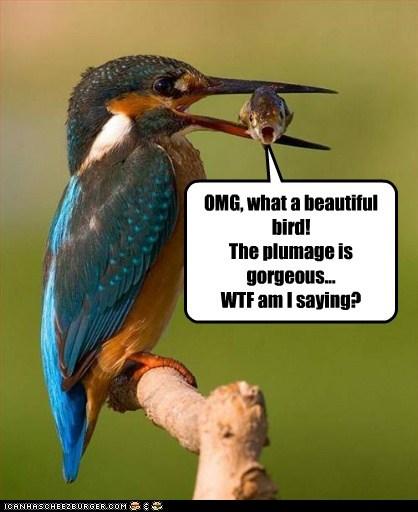 beautiful bird eating fish gorgeous wtf - 6508040448