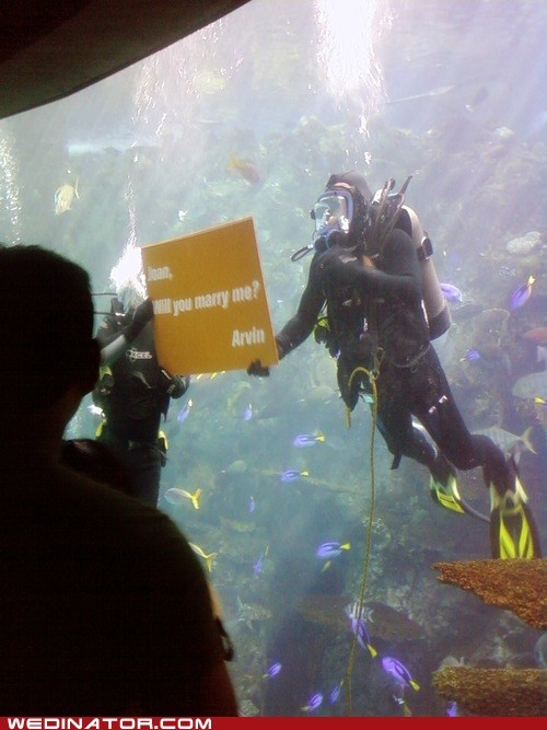 funny wedding photos ocean proposal scuba