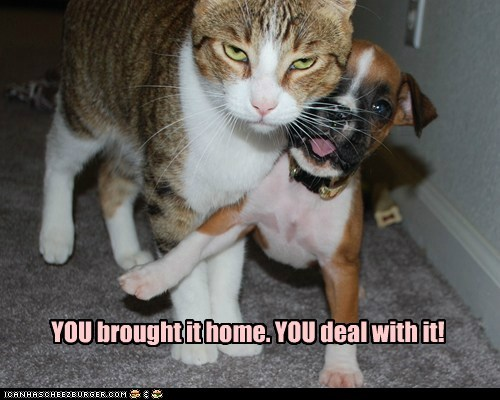 cat Deal With It dogs or else puppy what breed