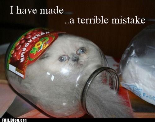 cat jar stuck - 6508427264