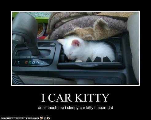 I CAR KITTY don't touch me i sleepy car kitty i mean dat