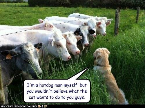cat cheeseburgers cows dogs hotdog warning - 6508537088