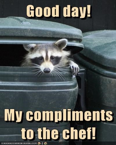 chef,compliments,food,garbage,good day,raccoon,restaurant