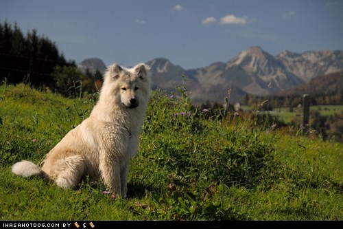 dogs eurasier Germany goggie ob teh week mountain - 6508702976