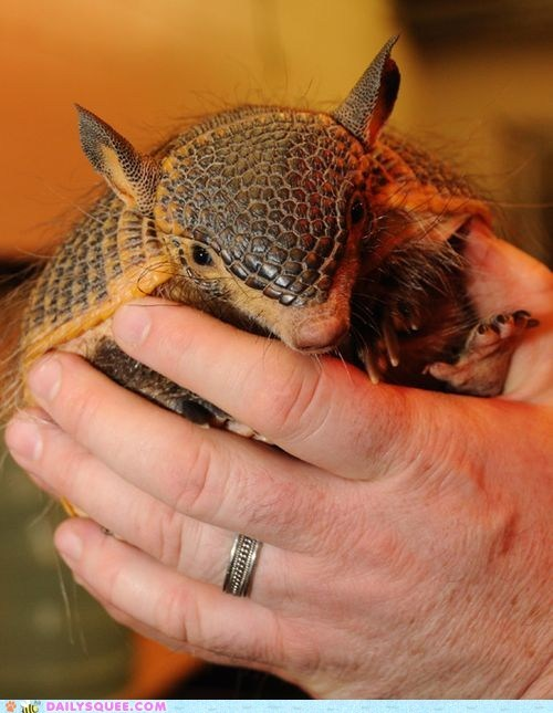 argentina armadillo baby hairy leathery squee spree - 6508891904