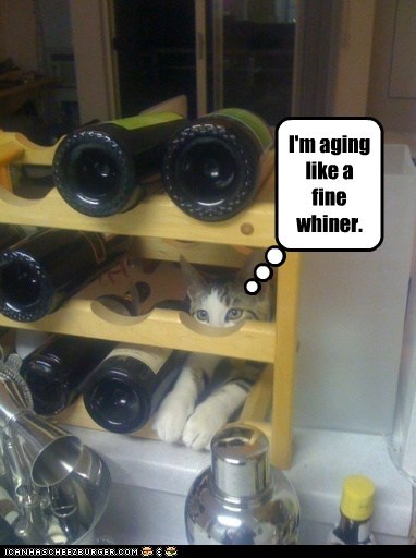 age,captions,Cats,complain,pun,whine,whiner,wine,wine rack