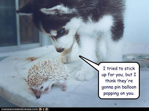 balloon Balloons blame hedgehog hedgehogs huskies husky Interspecies Love puppies puppy tried - 6509427200