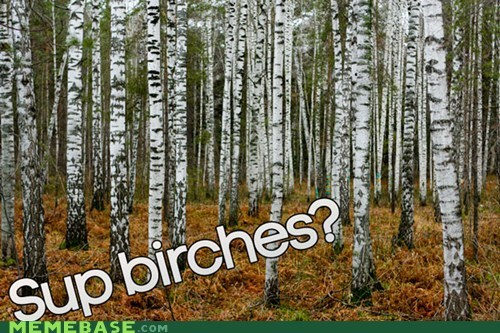 birch,birches,expletive,similar sounding,sup,tree,trees