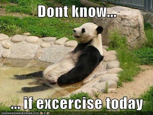 Cheezburger Image 6509906944