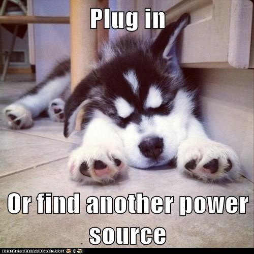 dogs,husky,low battery,nap,plug,powering down,puppy,sleeping