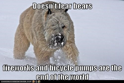 afraid,bears,bicycle,dogs,fireworks,irrational,snow,what breed