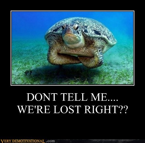 disappointed lost turtle - 6510265600