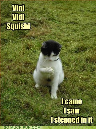 came cliché conquered idiom lolcats saw similar sounding squishy veni vidi vicci - 6510516480