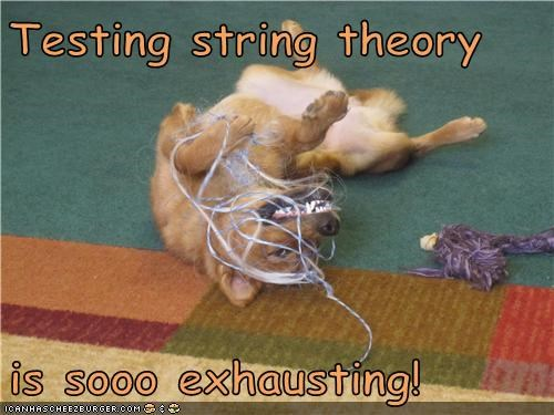 captions dogs experimental science string String Theory what breed yarn - 6510539008