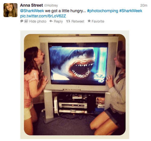 discovery channel photochomping shark week shark week shenanigans twitter pics - 6510637056
