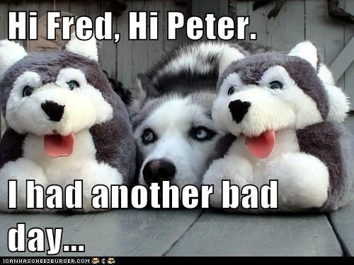 bad day dogs husky imaginary friends Sad slippers - 6510711808