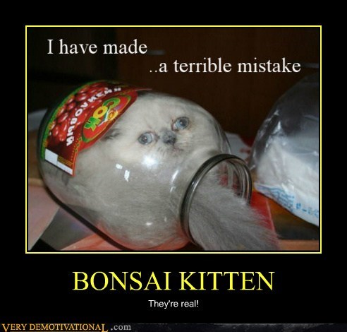 Bonsai,cat,hilarious,mistake