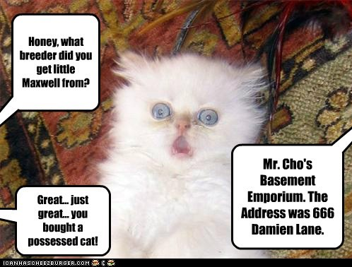 Honey, what breeder did you get little Maxwell from? Mr. Cho's Basement Emporium. The Address was 666 Damien Lane. Great... just great... you bought a possessed cat!