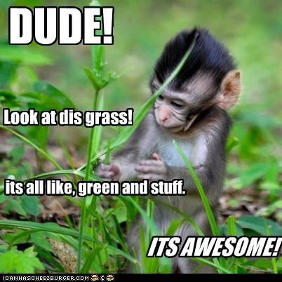 awesome drugs dude grass green high monkey