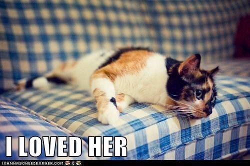 broken heart captions Cats love romance - 6510974464