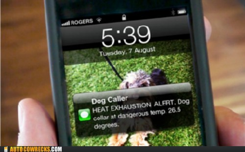 app of the week dog caller dogs heat exhaustion alert pets