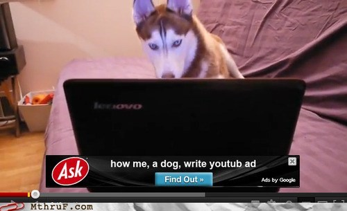 ask search engine,dogs,hello yes this is dog,search engine,youtube